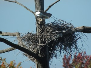 GBH Nest Close Up with Cameras